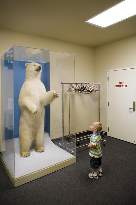 Last Polar Bear