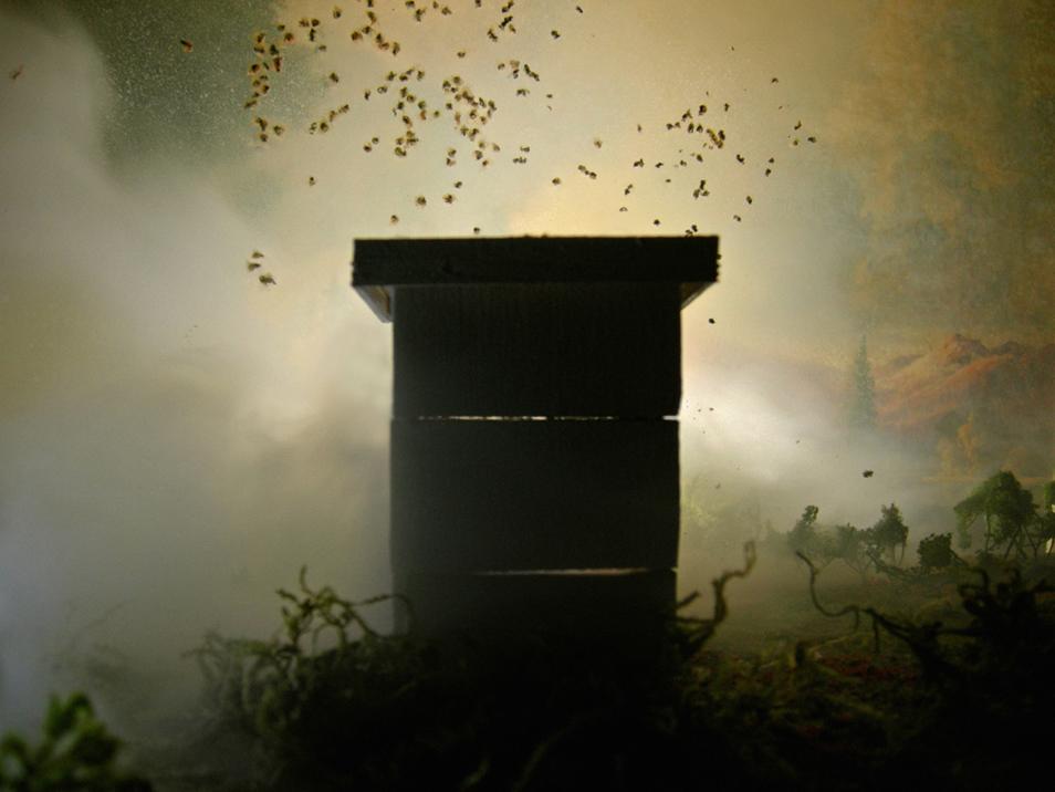 Misty Hive