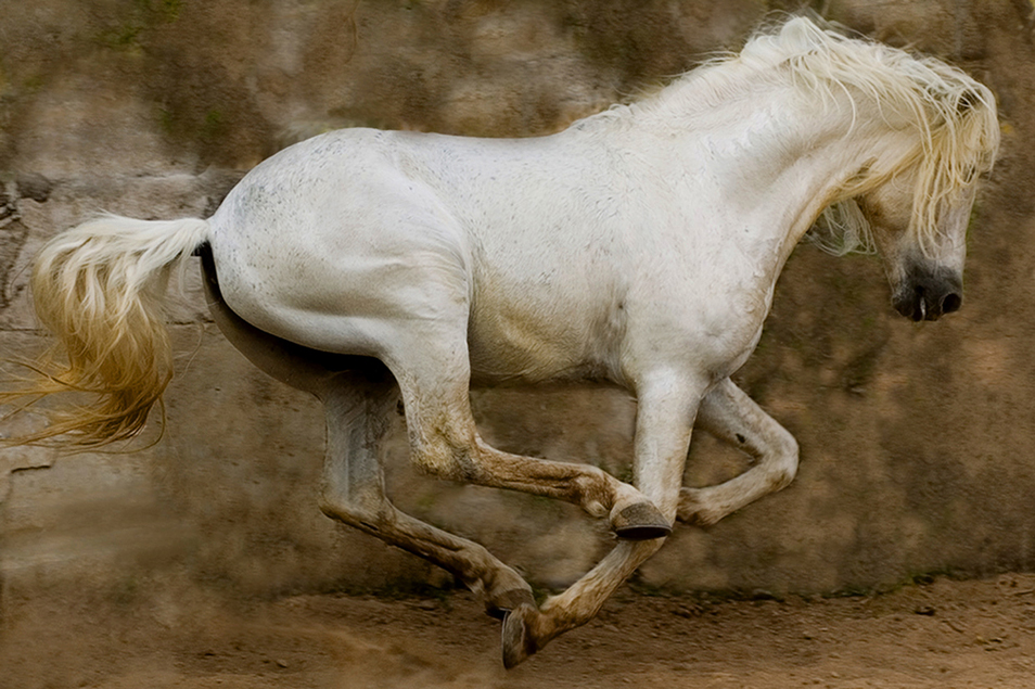 """White Stallion, Mexico"""