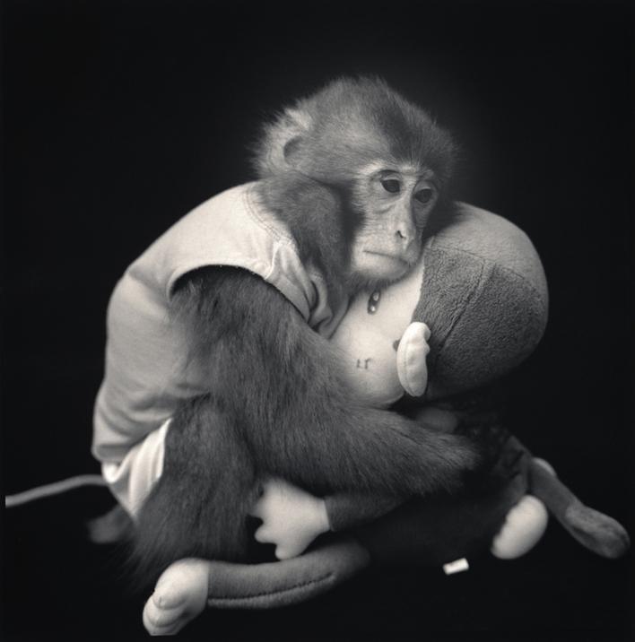 """Big with Monkey Doll, Suo Sarumawashi"" (2008)"