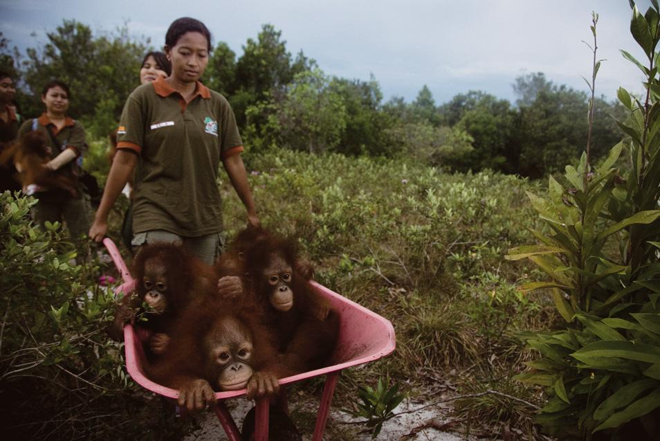Orangutan Sanctuary (6 photos)