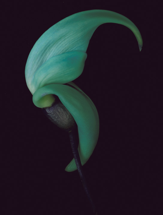 "An image from ""Petal Pushers,"" a photo essay on flowers."