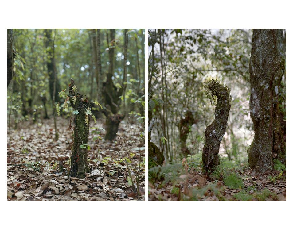 Los Jardines de México (Four Photos)