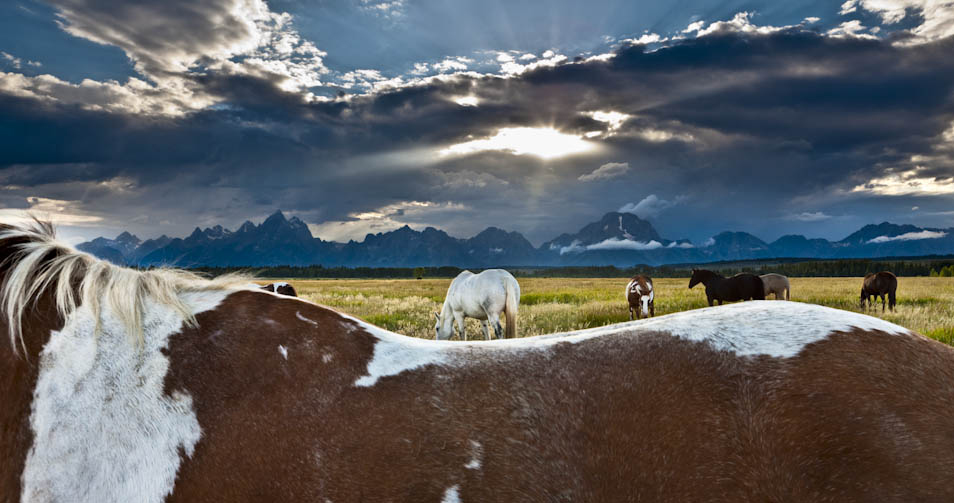 Art Wolfe: Unbridled (4 photos)