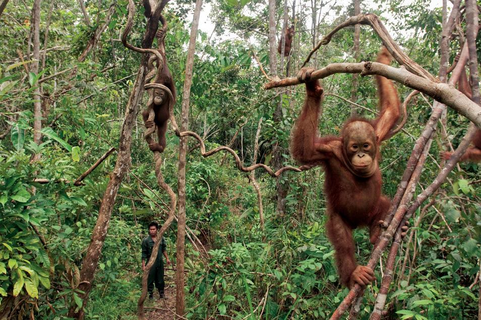 Wildlife Trade (5 photos)