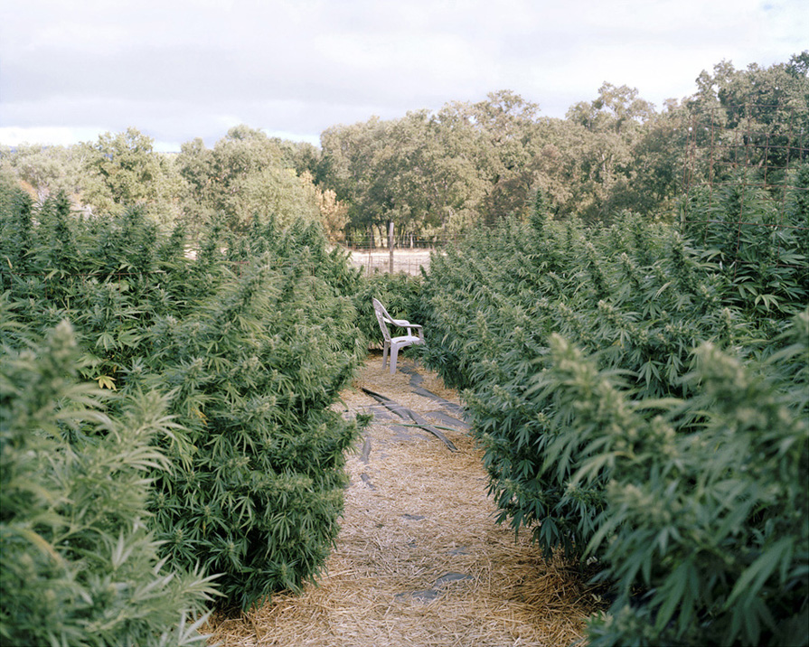 A Pot-Farming Life (5 Photos)