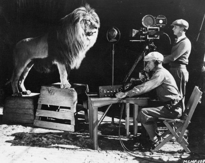 MGM lion roaring