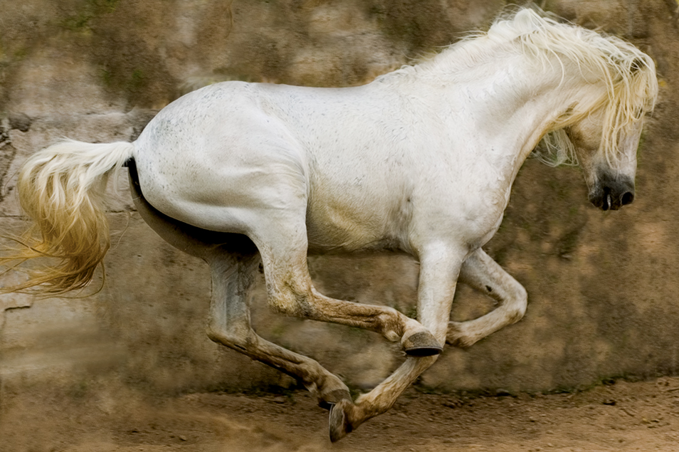 2. White_Stallion__Mexico__2004