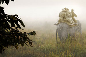 """The back of an elephant is the best way to get close other animals."" © Joan Myers"