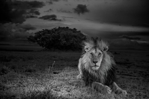 Serengeti National Park, Tanzania, 2012. © Michael Nichols/National Geographic, Courtesy Anastasia Photo