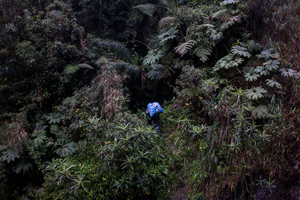 An illegal gold digger penetrates the dense forest in the Cotapata National Park near Bolivia's capital, La Paz. © Valerian Mazataud