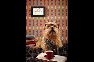 Augie, the Norwich Terrier (@augieledoggie). © Brittany McLaren