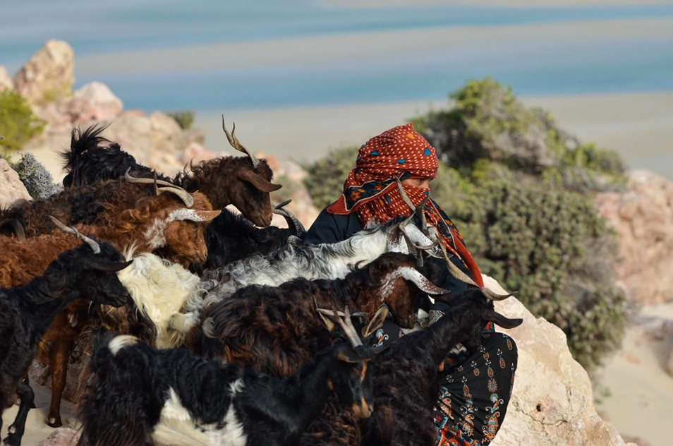a love song to socotra island yemen pdn photo of the day