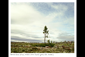 Rachel-Sussman_spruce-feat