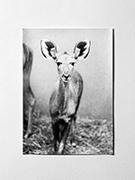 12-Picks-Jochen-Lempert-Untitled-Antilope-f