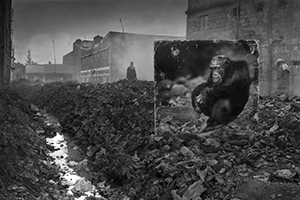 ALLEYWAY-WITH-CHIMPANZEE-3200px-f
