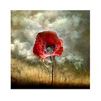"""""""Battlefield Poppy."""" © Giles Revell"""