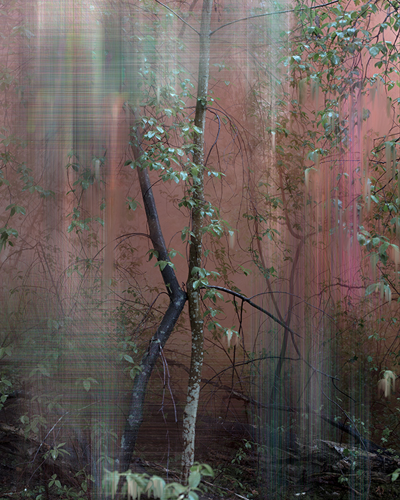 Painterly Photographs of Finnish Woods, Inspired by Chinese Landscapes